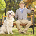 Senior man sitting on a bench with his labrador retriever, in a park